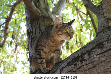 Ca(t)mouflage: Gorak the tomcat in walnut tree, 2017.08.27