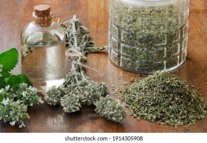 Catnip (Nepeta Cataria var. citriodora) essence oil with fresh and dried branches. Also there is a jar with dried cutted Nepeta leaves