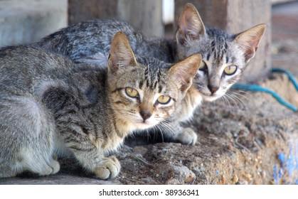 Fisherman´s cats