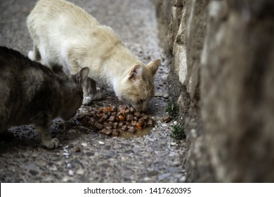 Cat Abuse Images, Stock Photos & Vectors | Shutterstock