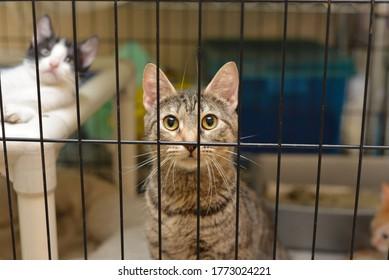 Cats at an Animal Shelter