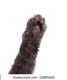 Cat's arm raised paw isolated on white