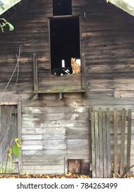 Cats in barn window.