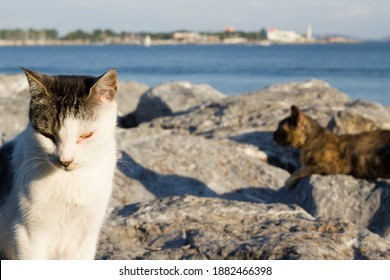 the cats by the sea enjoy the sun on the stones