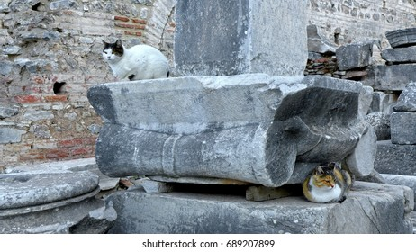 Cats in City of Ephesus, an ancient Greek city on the coast of Ionia, Selcuk in Izmir Province, Turkey.