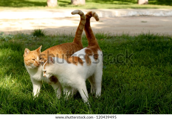 Cats couple in love