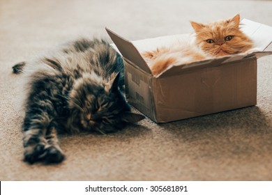Cats in delivery box