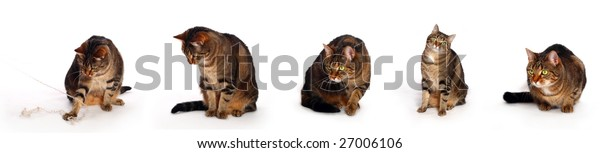 Cats in different, positions on white background