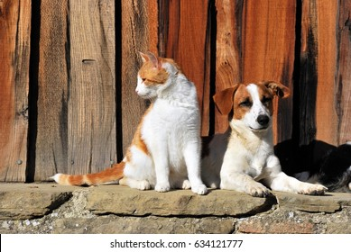 Cats and Dog outside the cottage