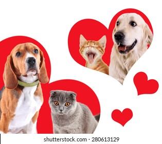 Cats and dogs in red hearts isolated on white