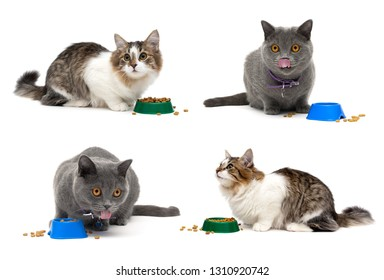 Cats eat food from a bowl on a white background. horizontal photo.