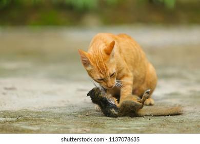 cats eat squirrels