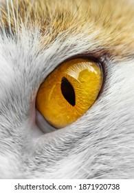 Cat's eye at close range