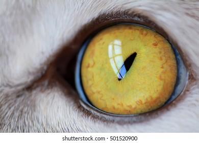 Cat's eye in macro