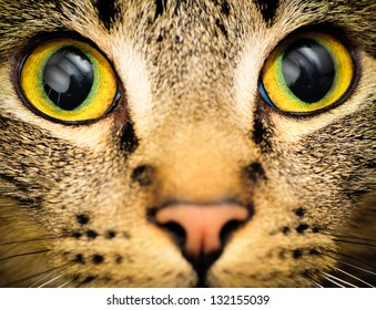Cats eyes: Close up of a tabby cats eyes
