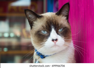 Cats face an angry and annoyed