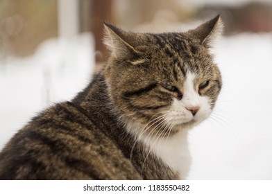 a cat's face with a background out of focus