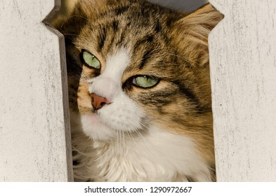 A cat's face between two white bricks, green eyes' look, beautiful pet