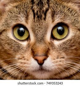 Cat's face close-up