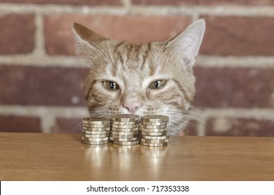 A cats face posing with a collection of money