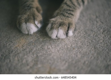 Cat's feet vintage style. Gray color.