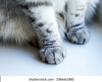 Cat's forepaws close up