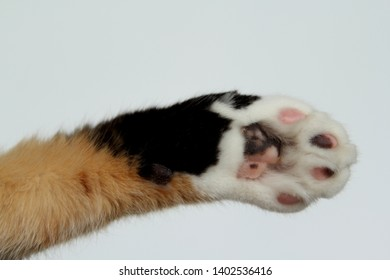 the cat's front foot is pivoted, copy space