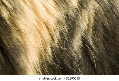 Cat's fur background, close up, macro view