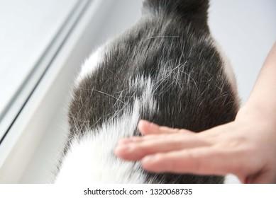 Cat's fur loss, cat health problems, combing a cat