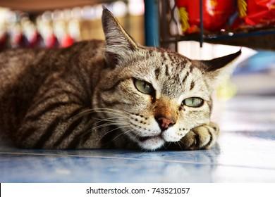 Cats furry cute