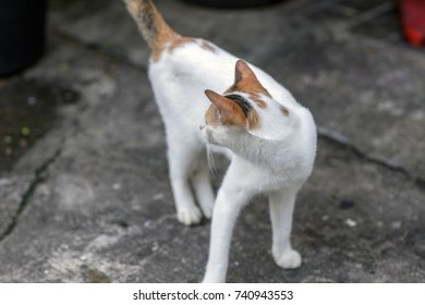Cat's gestures