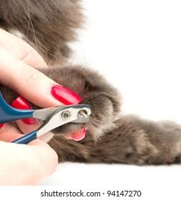 Cat's getting a nail trim