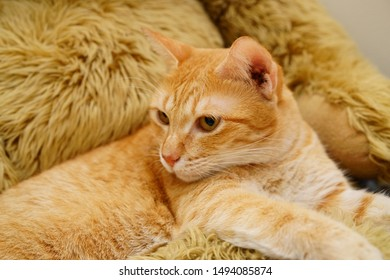 Rescue+cat Images, Stock Photos & Vectors | Shutterstock