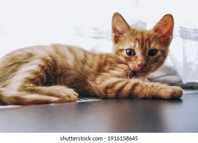 cats kitten playful fluffy domestic pets
