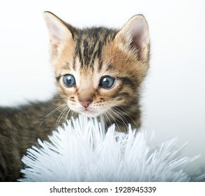 cats and kittens different breeds and colors