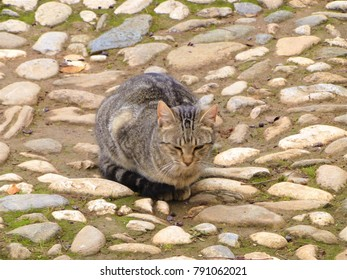 Cats living in the Alhambra palace