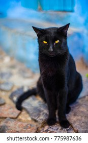 Cats living in Chefchaouen