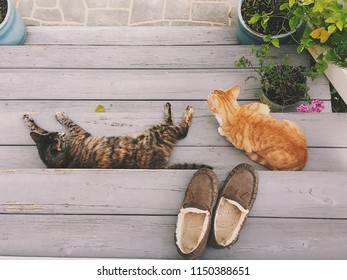 Cats lounging on porch stairs