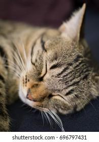 A cat's nap