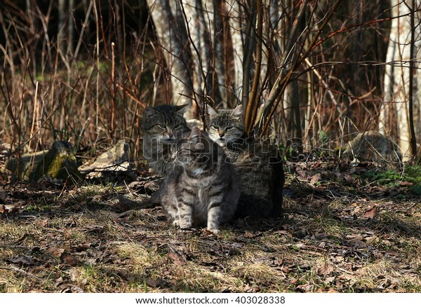 Cats in nature