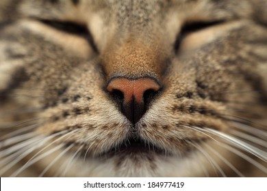 Cat's nose closeup.