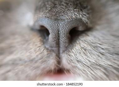 cat's nose in macro