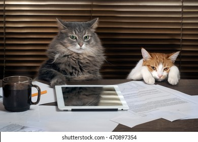 Cats office staff. The office, table, tablet, working environment. The chief and the subordinate. The concept of business, pet products, different characters