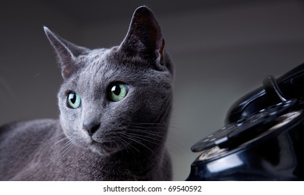 Cats and old black manual phone with dial plate