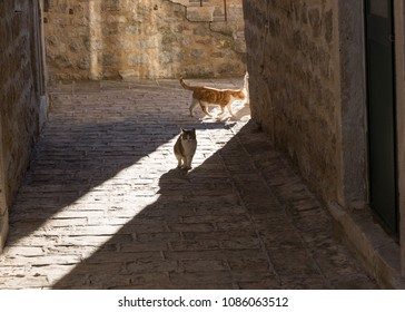 Cats in the Old Town in Budva, Montenegro