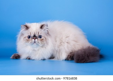 Cats on the blue background