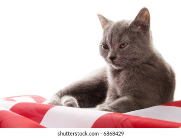 Cats on flag