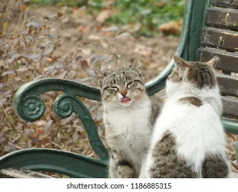 Cats on the park bench