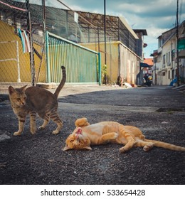 Cats on the street