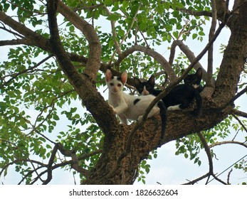Cats on the tree on natural background.